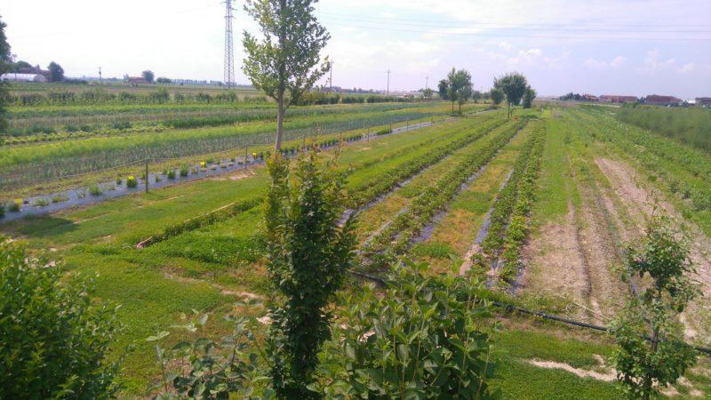 verdure da raccogliere in estate