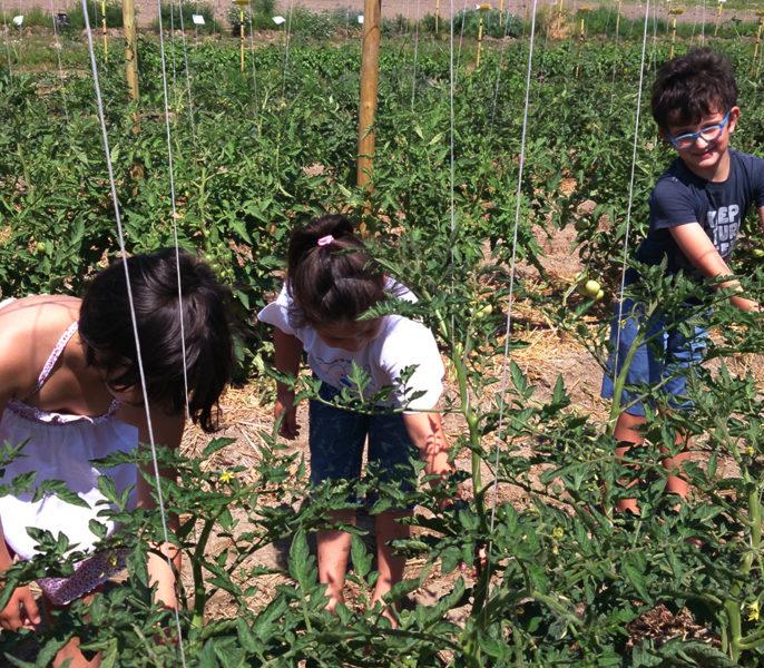 fattoria-didattica-a-lusia