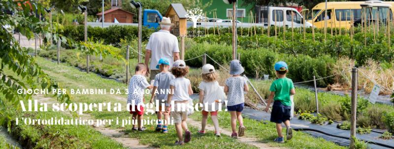 alla scoperta degli insetti attività per bambini